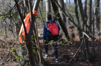 The first mile of the trail is indicated by orange markers tied to trees. (Photo by Kelly Zegers
